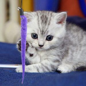 Katzenspielzeug Einziehbare Katze Teaser Zauberstab Spielzeug Set